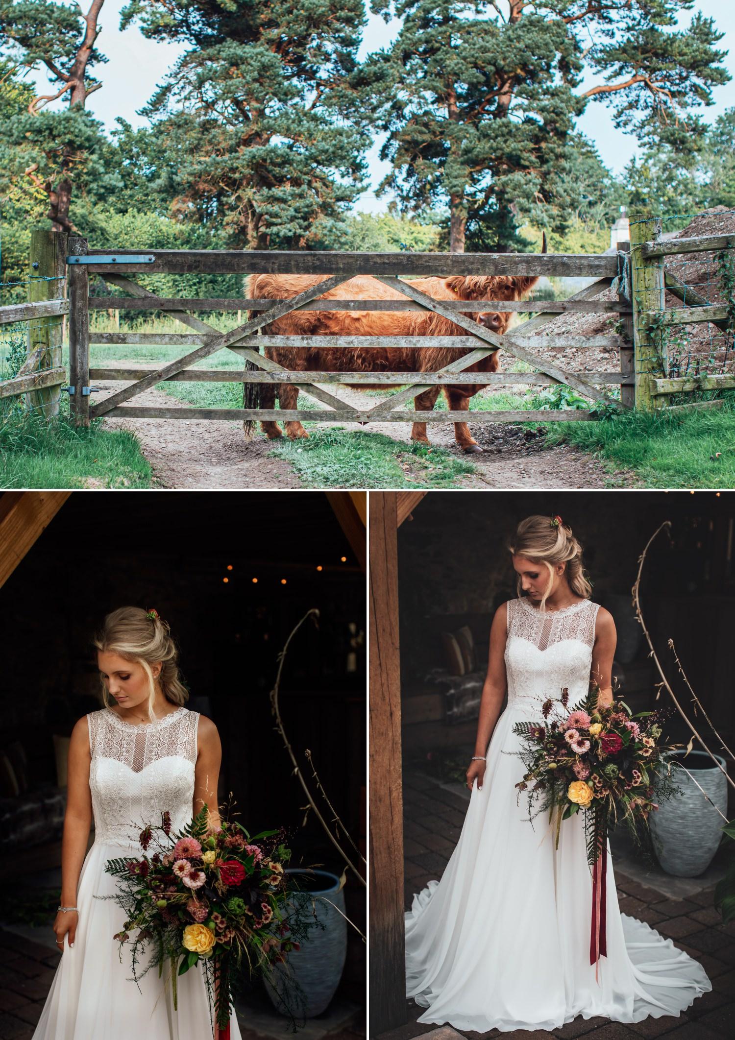 wedding photography of highland cow and brides wedding dress